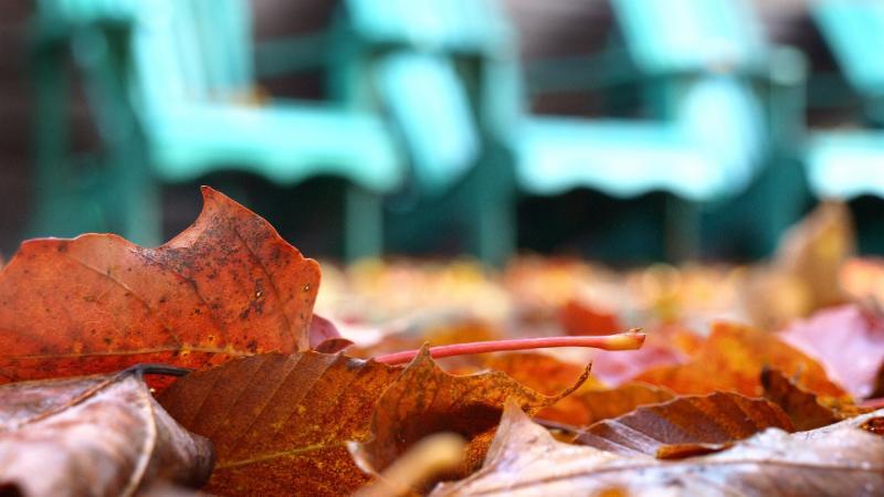 An image of the autumn season at Camp Wenonah in Muskoka Ontario Canada